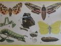 sommerfugle-ramme-web