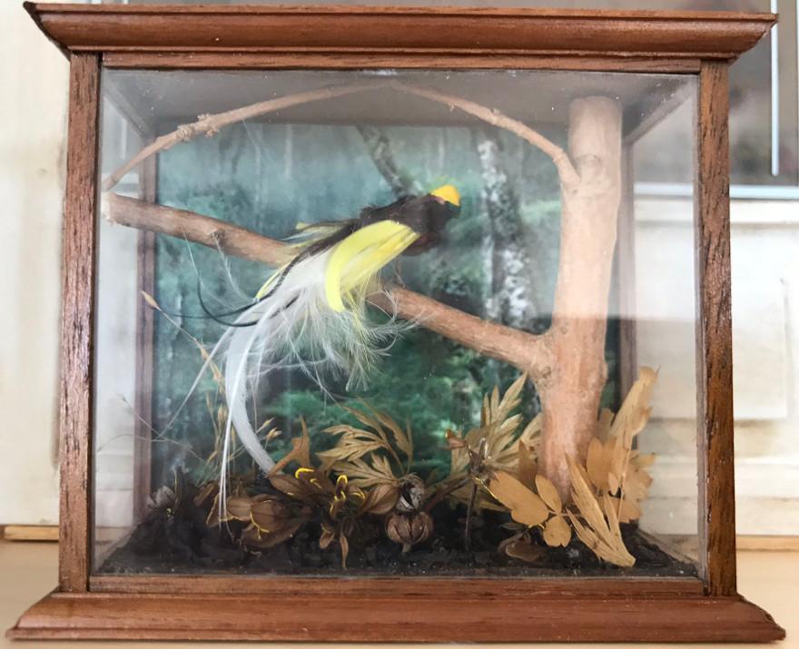 stor-paradisfugl-web